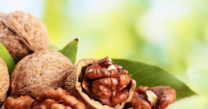 Ореховые настойки и отвары для удаления волос