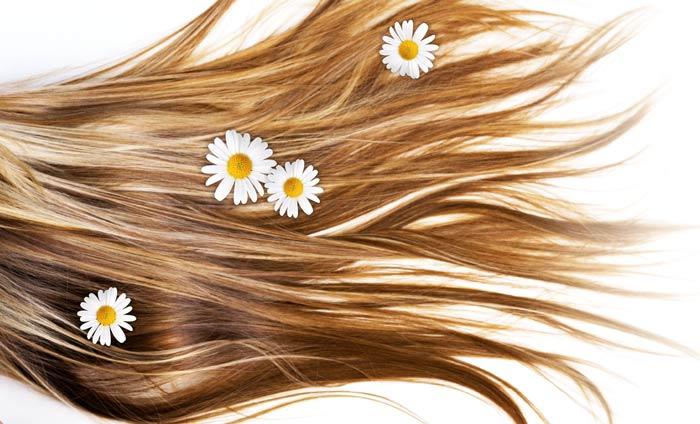 Регулярное ополаскивание волос отваром из ромашки