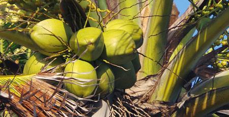 Маска для волос на основе масла кокоса