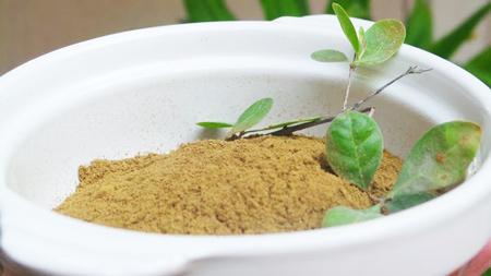 Маска с оливковым маслом и хной