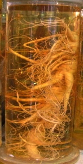 Настойка женьшеня: инструкция по применению