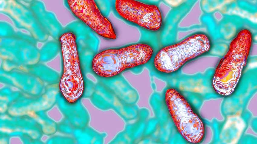 Что такое ботулотоксин