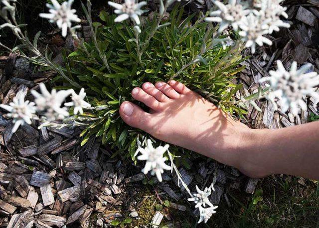 Что делать, если у вас вросший ноготь на большом пальце ноги, какое возможно лечение?