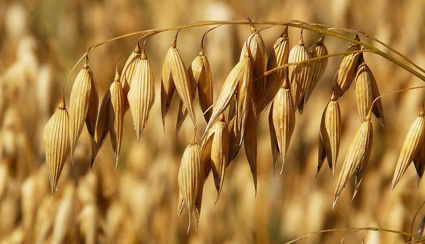 Спрей от роста волос на теле горстку березовых листьев